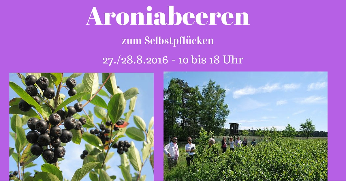 aroniabeeren zum selbstpfl cken auf der bio aronia plantage. Black Bedroom Furniture Sets. Home Design Ideas