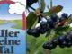 Beeren aus dem Aller Leine Tal