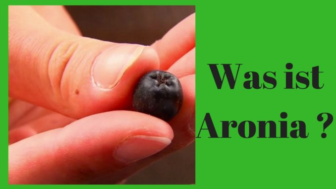 Was ist Aronia