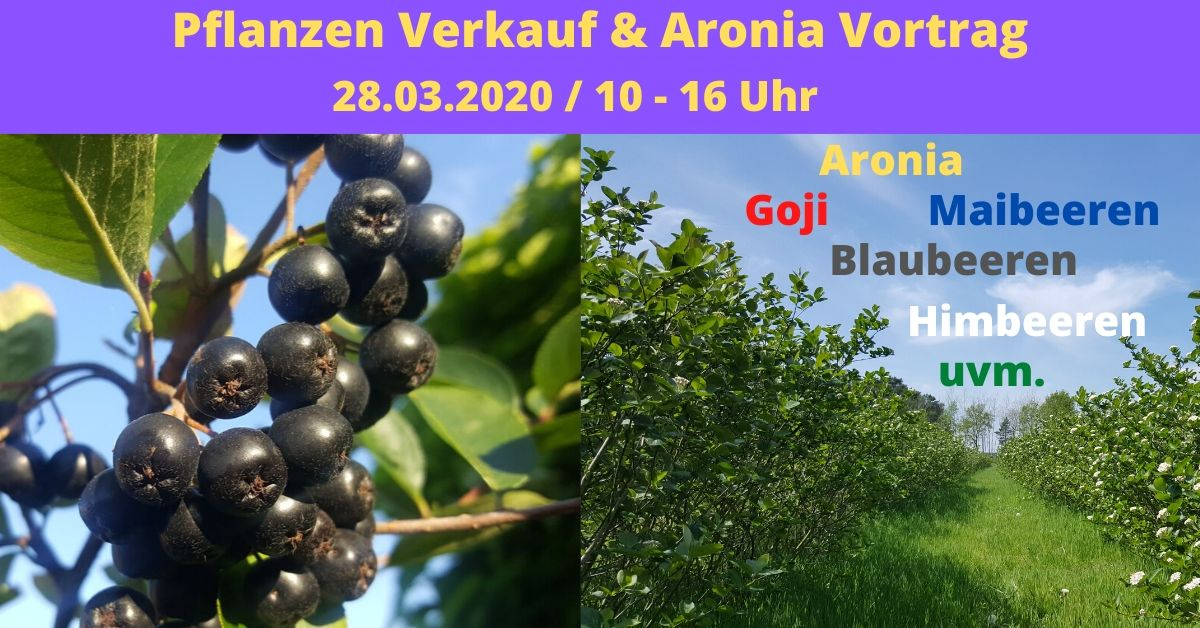 Aronia Pflanzen Verkauf